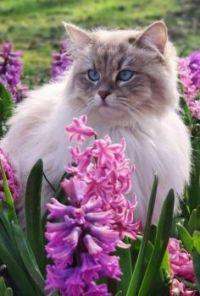 Kočička a hyacinty
