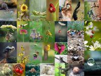 animals01_588