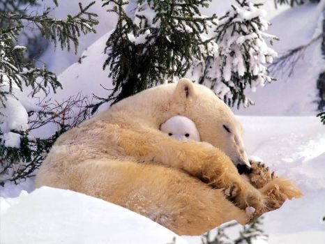 mommy keeps you warm