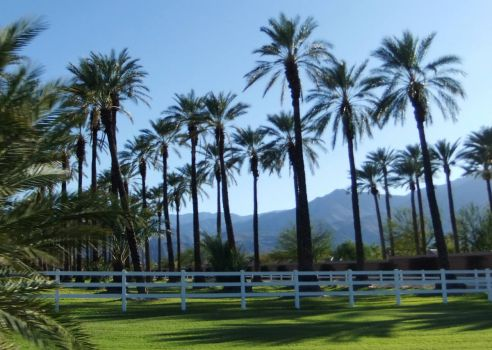 Mountains and Date Palms