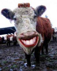 Usmev slusí kazdému