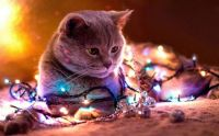 Karácsonyfa bontás