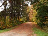 The road into a farm