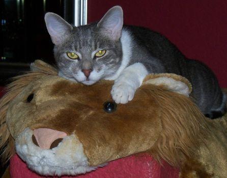 Stryder on the stuffed lion.