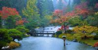 Seattle's Japanese Garden after the rain