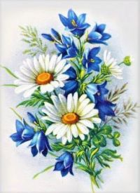Delightful Daisies #37 - Ox-eye Daisy or Dog Daisy