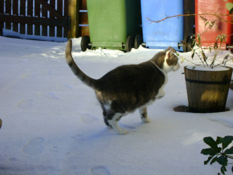 Ash - Oh, I don't like this white stuff at all. It is cold and wet!