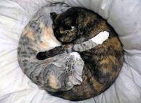best friends-funny cat photos
