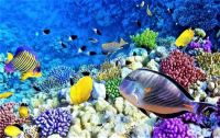 THEME: Fish, Amphibians & Reptiles . . . Red Sea Coral Reef, with many tropical fish