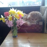 Max had to prune the flowers due to severe frost - for Marge and Nev ♥
