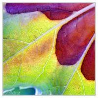 Colours 03