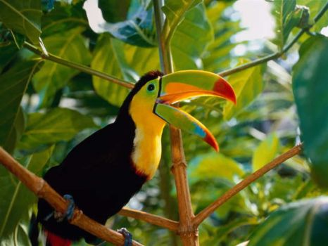 Toucan, a bird with attitude