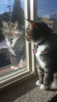 Watch-cat