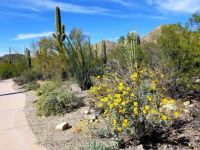 Saguaro National Park in spring