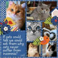📷  Photos Cutie Pie Cats & Kittens #2