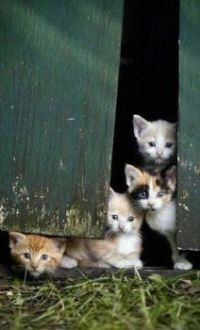 all kittens are adoreable, even wild ones!