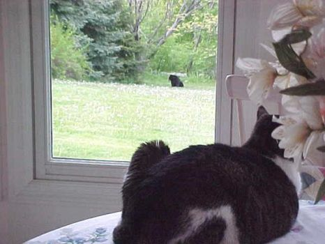 Mister Mewsic Spying on Gimpy the Bear