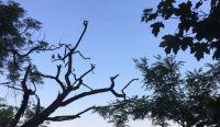 Jeden zachráněný strom na nábřeží v Praze..