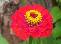 Flower I Grew