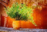 Clay Pot & Plant