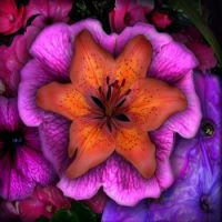 BEAUTIFUL FLOWER COLLAGE OF ORANGE, PINK & PURPLE...
