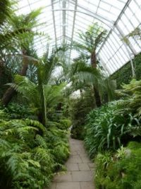 Ferns at Tatton Park