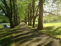 Plane tree avenue in Strážnice, CZ