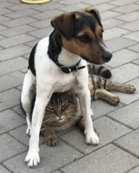 Dog on Cat