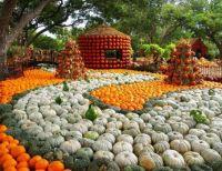 Autumn at the Arboretum, Dallas, Texas