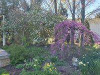spring 2021 Wegerzyn Garden Dayton Ohio