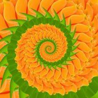 Spiral 02 Medium