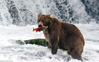 Fishing in Alaska, by Tim Plowden