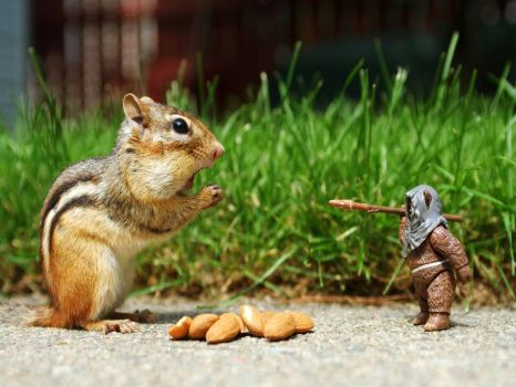 Hand over the nuts!