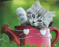 Red Kitten in Red Watering Can