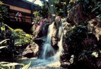 Waterfall in the lobby of the Polynesian Resort in Disney!