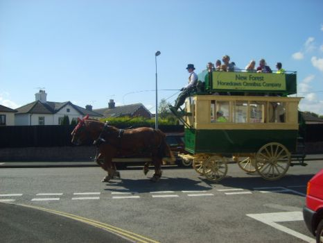 The new forest bus company