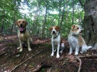 Søde hunde på skovtur