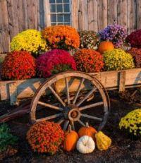 Autumn pride