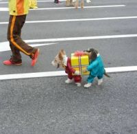 Halloween Fun #10 (Best Pet Costume EVER!! LOL)