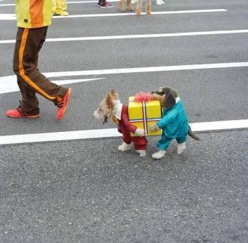 Halloween Fun #10 (Best Pet Costume EVER!! LOL)