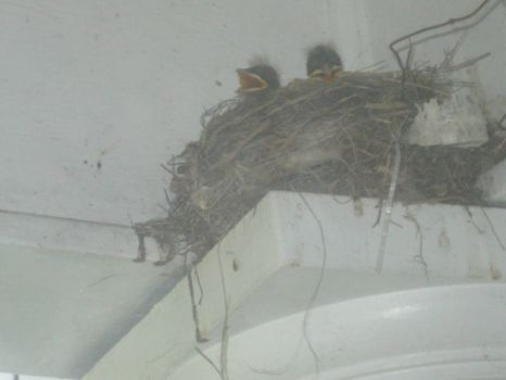 Birds nest above the column of the house