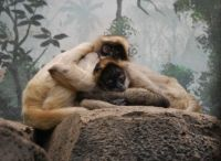 Two Young Spider Monkeys