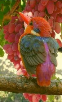 bird with grapes