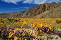 Anza-Borrego Desert State Park, California, USA - smaller