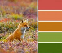 Fox on Guard