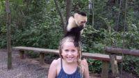 Cappuccino monkey on girl