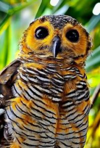 What an Owl