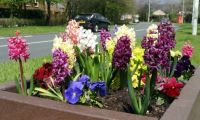 Roadside Spring Flower Display (3)