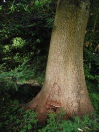Fungus on tree trunck