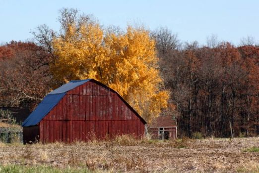 Old Barn ~ Southern Illinois